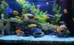 Как помыть аквариум