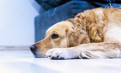 Запах собачьей мочи