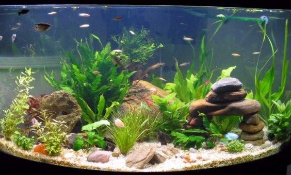 Осмотр водорослей аквариума